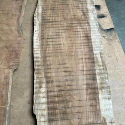 2,3 m dlouhá Parota z Costa Ricy